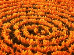 Millenerpoort Doppio Spiral